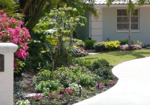 picture of landscaped house